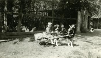 Red Deer Archives, P3284; Jimmy with Fanny the goat, 1926