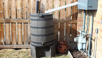 photo of a rain barrel  set up in a yard with a down spout feeding into it