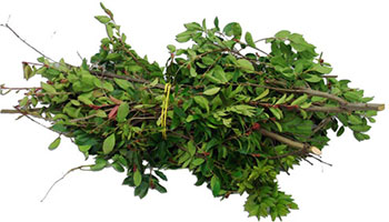 Yard waste tree clippings