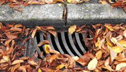 leaves covering storm drain