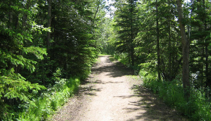 One of Red Deer's trails, flanked by tall trees on either side of the trail.